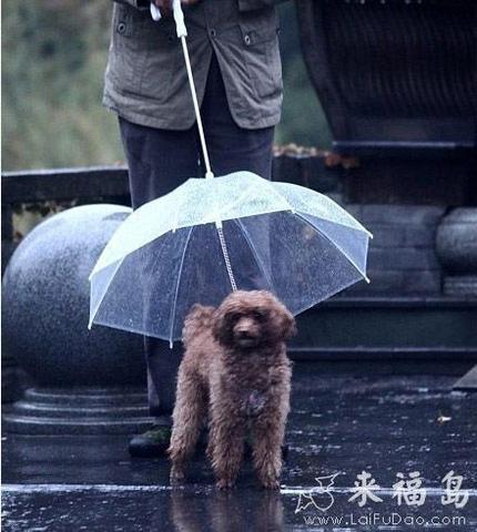 为小狗遮风挡雨,小感动。