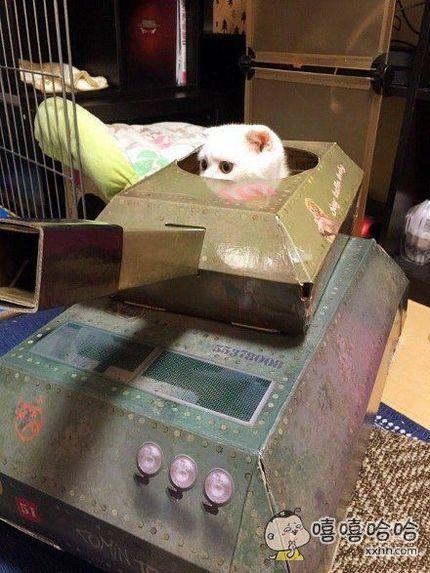 一位主人组装了台猫用坦克,效果好像很好,猫咪也二话不说就钻进去了。。。