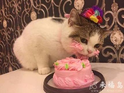 生日快樂,喵喵!