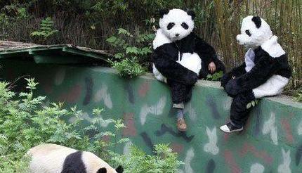你们是熊猫派来的逗比吗