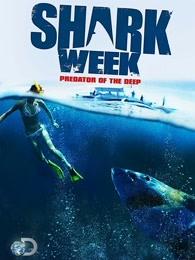 鲨鱼周2013