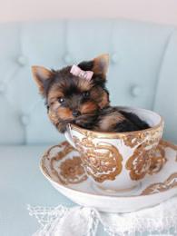 小狗的奇妙世界