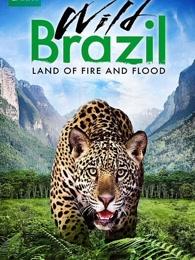 野性的巴西