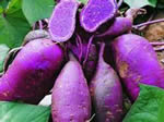 """红薯和紫薯相争!真正的""""抗癌大王""""属于谁"""