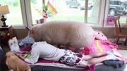 25岁帅气男子爱上一头母猪
