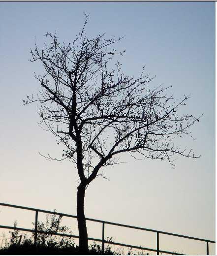photoshop抠图教程-树枝抠图方法